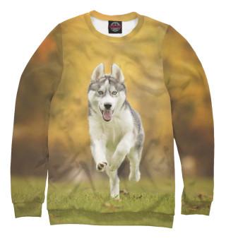 Одежда с принтом Год Собаки (901903)